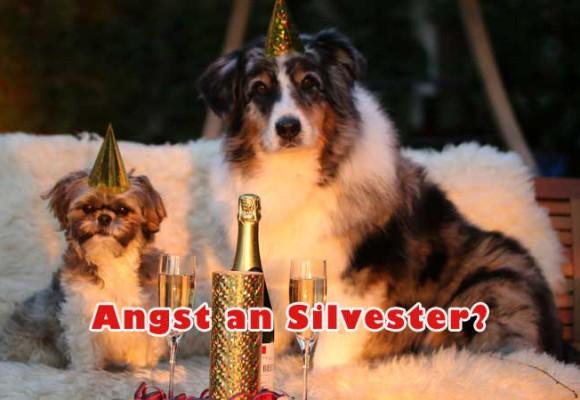 Tipps gegen Silvesterstress für deinen Hund