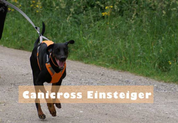 Was ist Canicross?