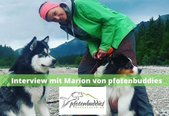 Interview mit Marion von pfotenbuddies