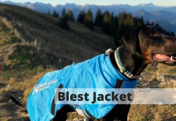 Blest Jacket nur für den Zughundesport?