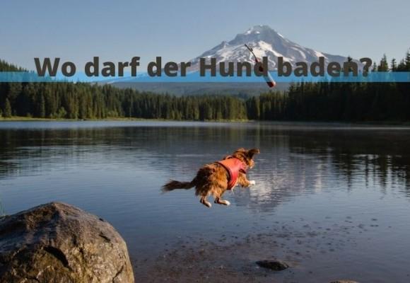 Badeseen in Oberbayern: Wo darf der Hund mit?